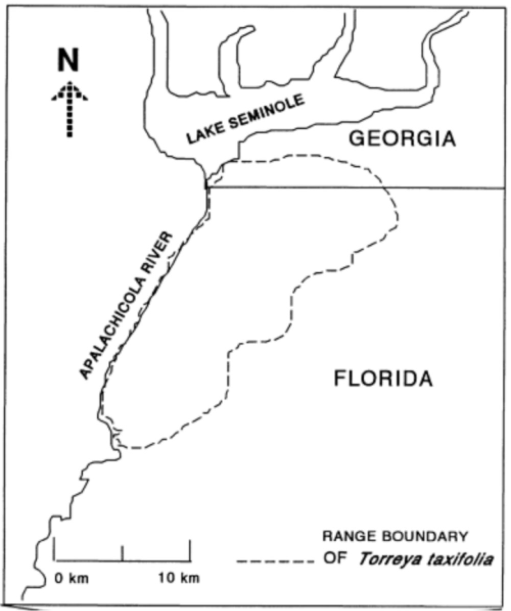 Florida Georgia Map.About Torreya Taxifolia