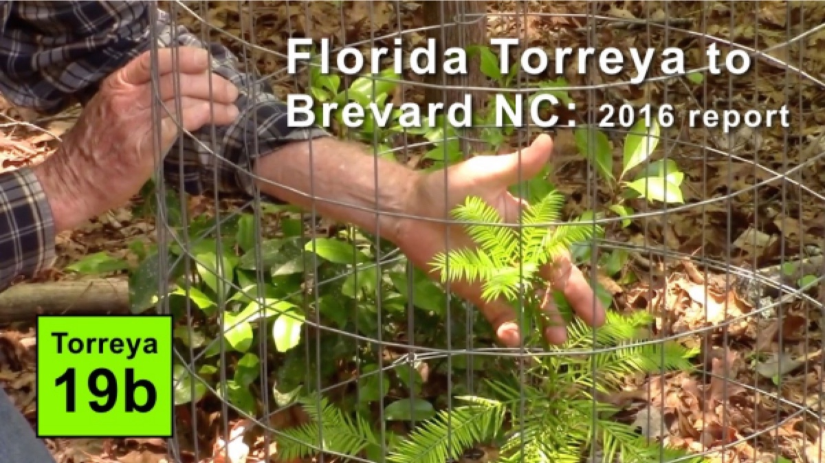 Reports Torreya Rewilding And Assisted Migration 2006 Ford Five Hundred Radio Wiring Diagram 19b Florida To Brevard Nc 2016 Report